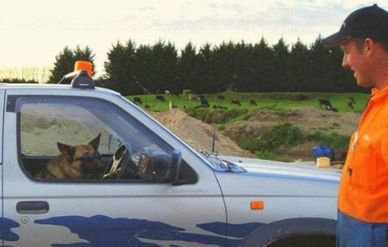Funny Bizarre Things Captured At Perfect Time On Road - 35 Photos -02