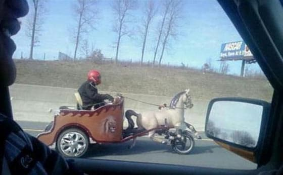 Funny Bizarre Things Captured At Perfect Time On Road - 35 Photos -05