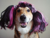 50 Pics of Funny Dogs In Unusual Weird Wigs That Will Blow Your Mind