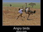 Meanwhile Angry Birds In Africa – Funniest Real Angry Birds