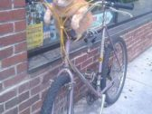 Funny Cat Loves Bicycle Riding