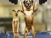 These Funny Dogs Will Make You LOL