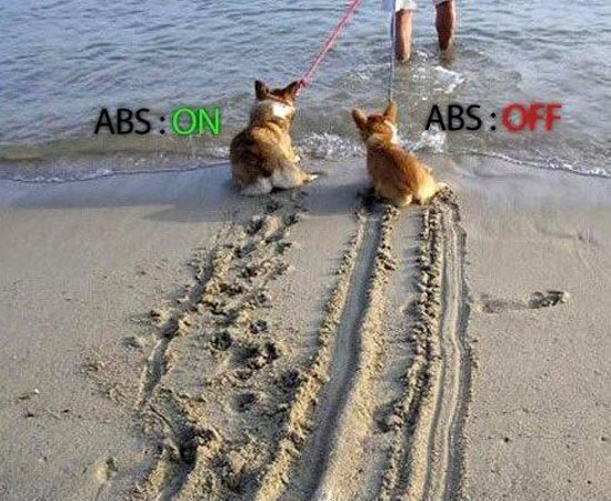 Funny Dog With And Without Anti-lock braking system