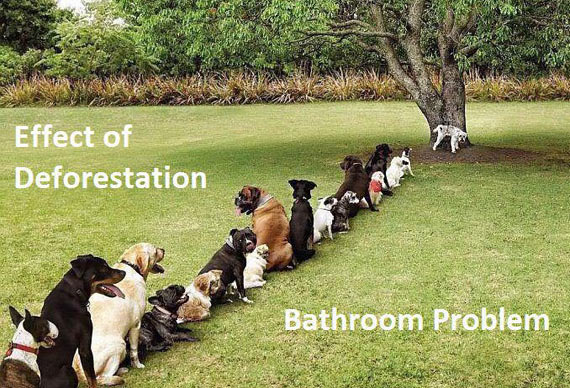 Dogs Suffering Bathroom Problem Will Shock You