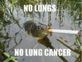 Funny Fish Loves Smoking That Will Shock You