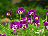30 Pictures of Funny And Weird Flowers Of The Day