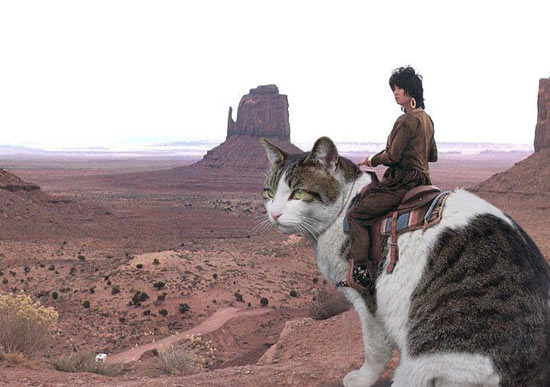 funny girl riding on cat