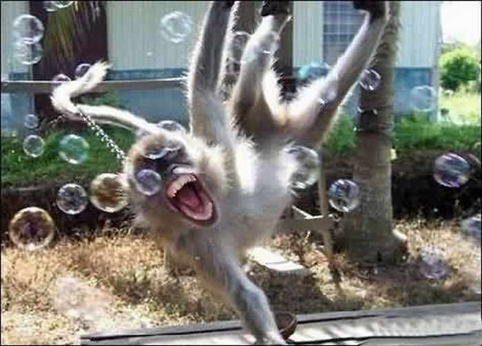 Best Funny Monkey Pictures Of All Time - 55 Pics -02