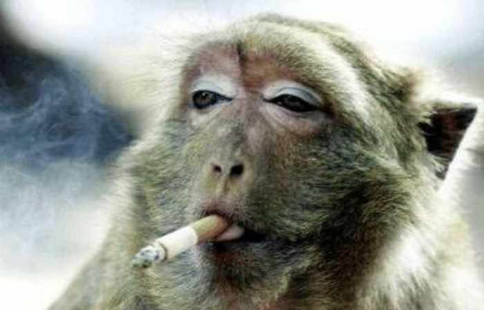 Best Funny Monkey Pictures Of All Time - 55 Pics -03