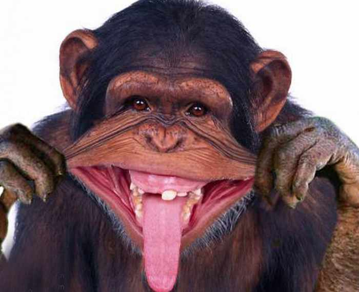 Best Funny Monkey Pictures Of All Time - 55 Pics -18
