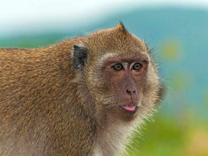Best Funny Monkey Pictures Of All Time - 55 Pics -21