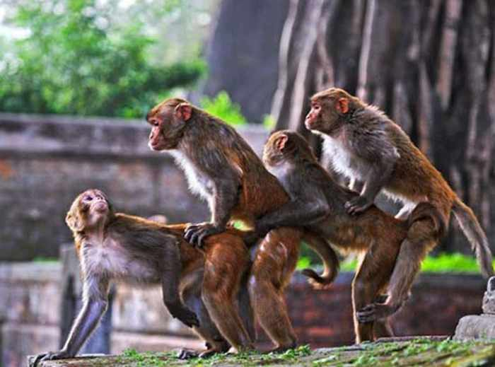 Best Funny Monkey Pictures Of All Time - 55 Pics -22