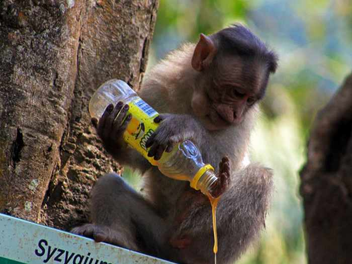 Best Funny Monkey Pictures Of All Time - 55 Pics -23