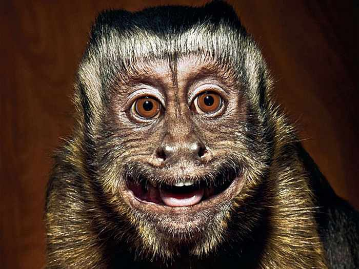 Best Funny Monkey Pictures Of All Time - 55 Pics -30