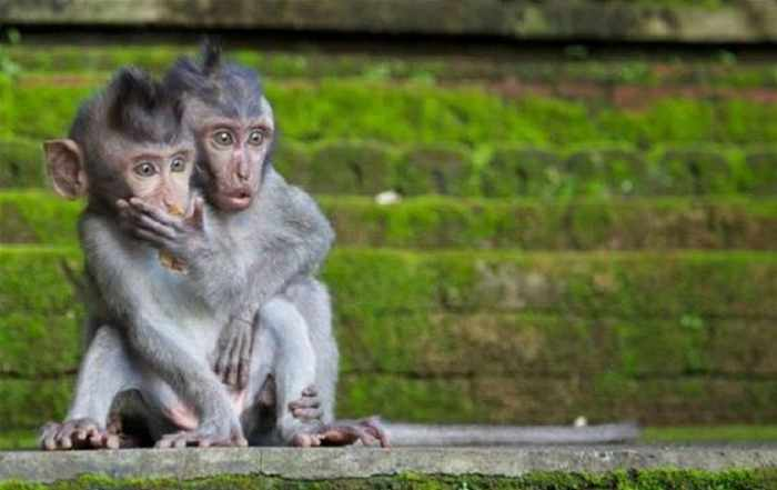 Best Funny Monkey Pictures Of All Time - 55 Pics -32