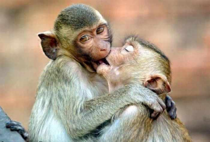 Best Funny Monkey Pictures Of All Time - 55 Pics -35