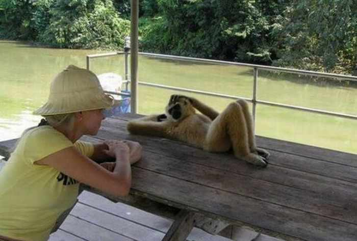 Best Funny Monkey Pictures Of All Time - 55 Pics -39