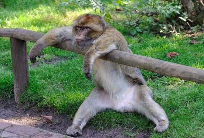 Best Funny Monkey Pictures Of All Time - 55 Pics -53