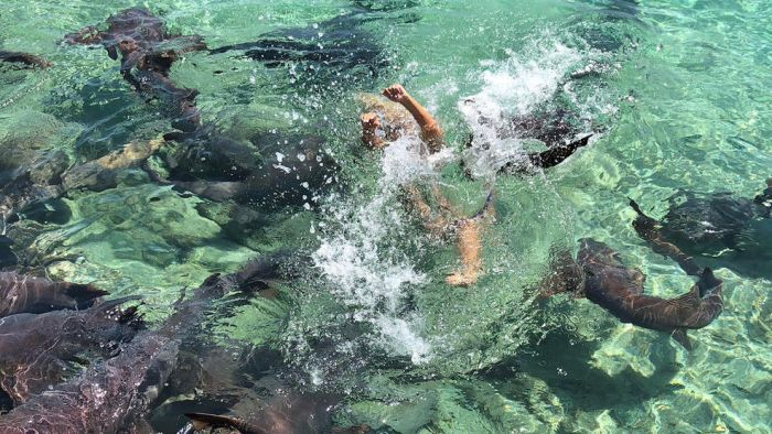 Photoshoot with Sharks Went Wrong (5 Pics) -03